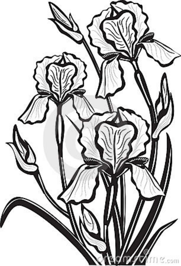 Iris clipart black and white clip art Iris Clipart | Free download best Iris Clipart on ClipArtMag.com clip art