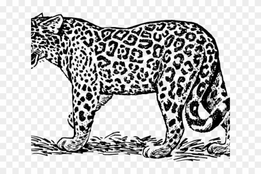 Black and white jaguar clipart image black and white Jaguar Clipart Jaquar - Jaguar Clipart Black And White, HD Png ... image black and white