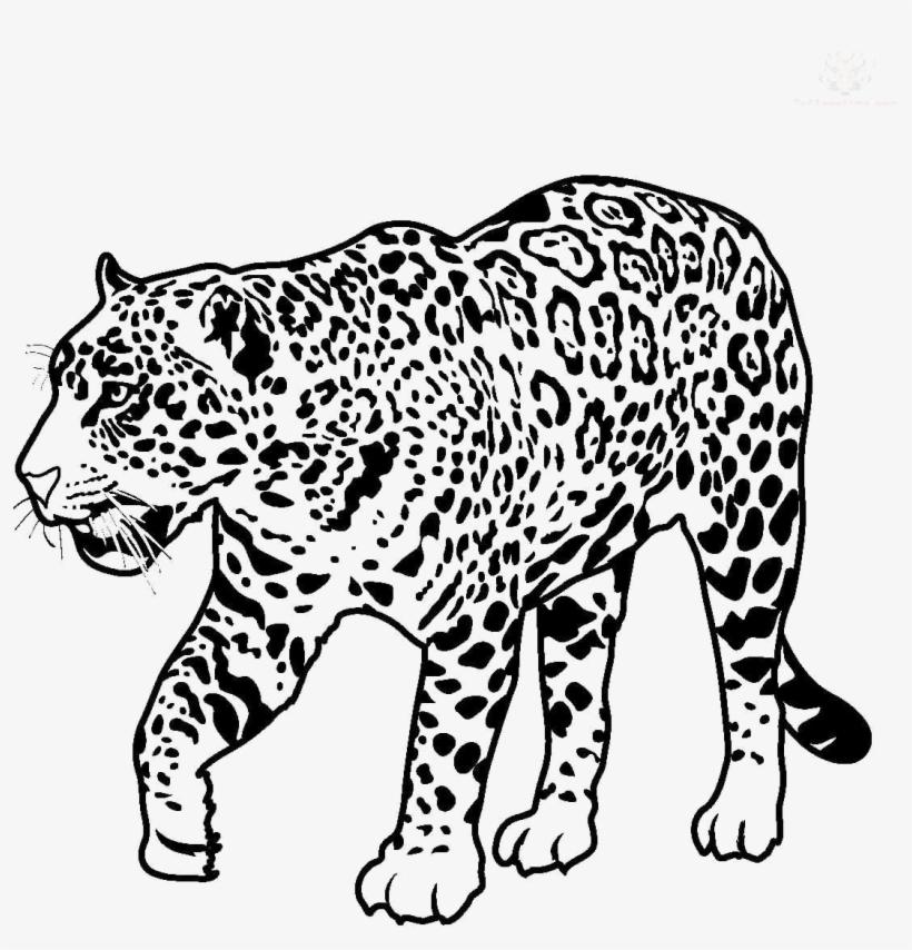 Black and white jaguar clipart banner freeuse Jaguar Walking Transparent Image - Jaguar Clipart Black And White ... banner freeuse