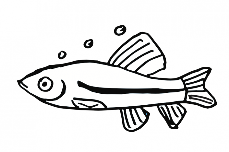 Black and white minnow clipart picture transparent download Fundraiser by Rebecca Chapa : The Hungry Minnow Start Up Fund picture transparent download