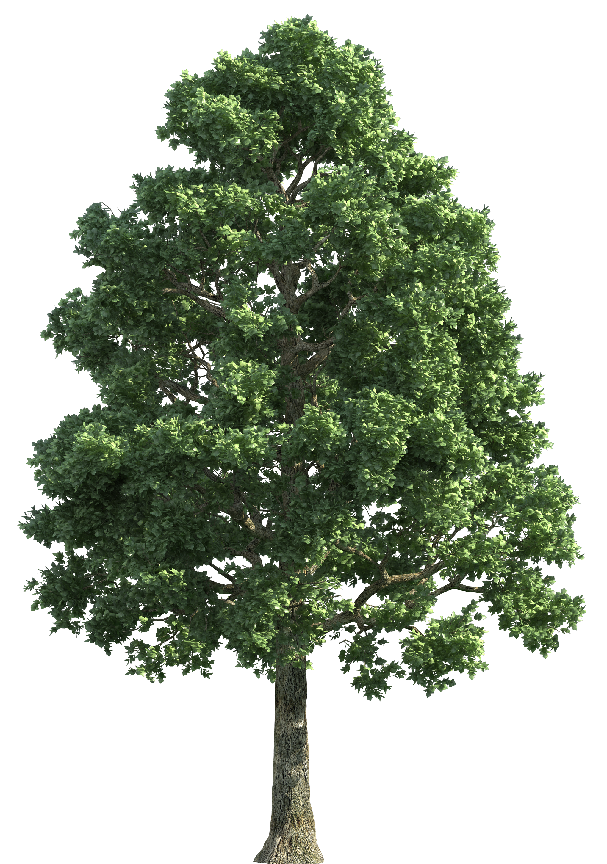 Green Realistic Tree PNG Clip Art - Best WEB Clipart graphic free library