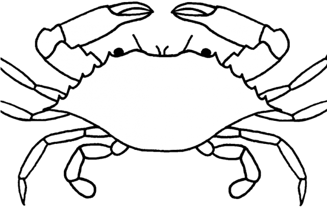 Black and white picture of crab clipart png freeuse download Shape Clipart Crab - Png Download - Full Size Clipart (#3010931 ... freeuse download