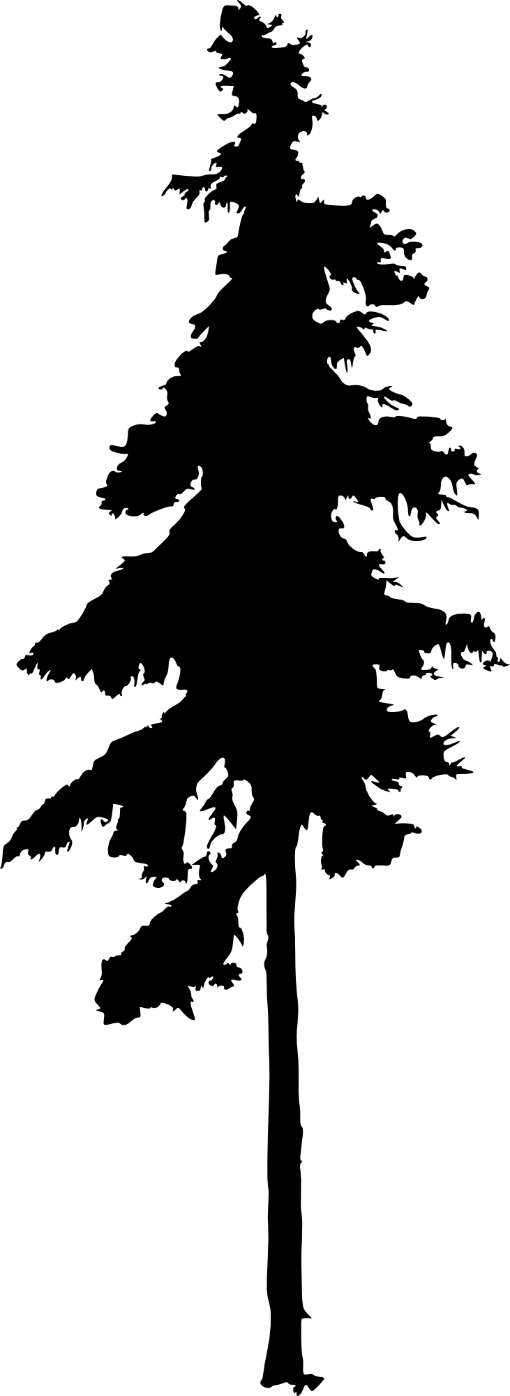 Cedar tree clipart black and white picture free Eastern White Pine Silhouette at GetDrawings.com | Free for personal ... picture free