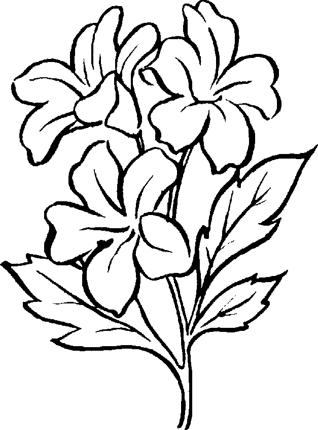 Jasmine plant clipart png black and white jpg freeuse download Black And White Plants Group with 73+ items jpg freeuse download