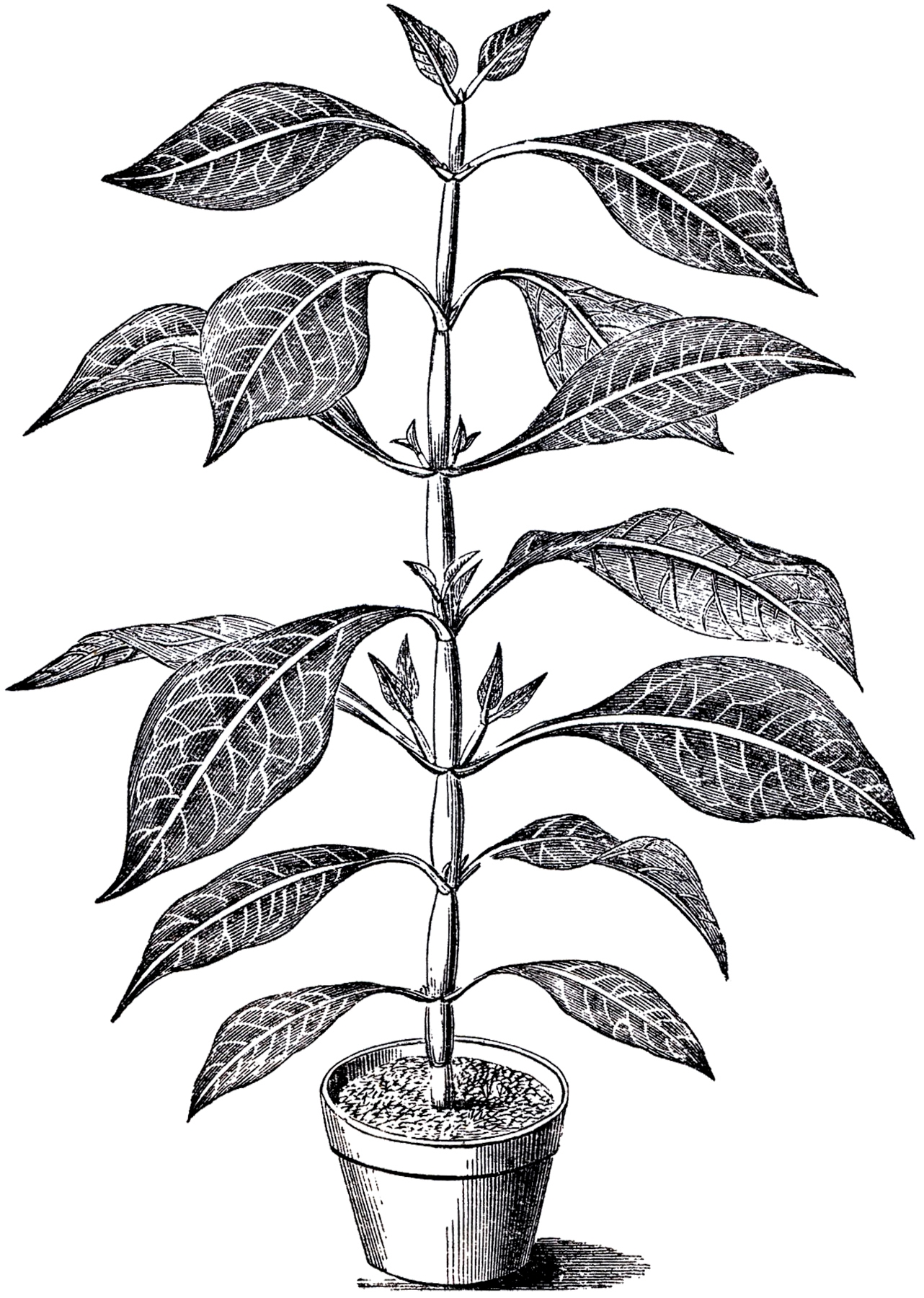 Black and white clipart plant banner transparent stock 98+ Plant Clipart Black And White | ClipartLook banner transparent stock