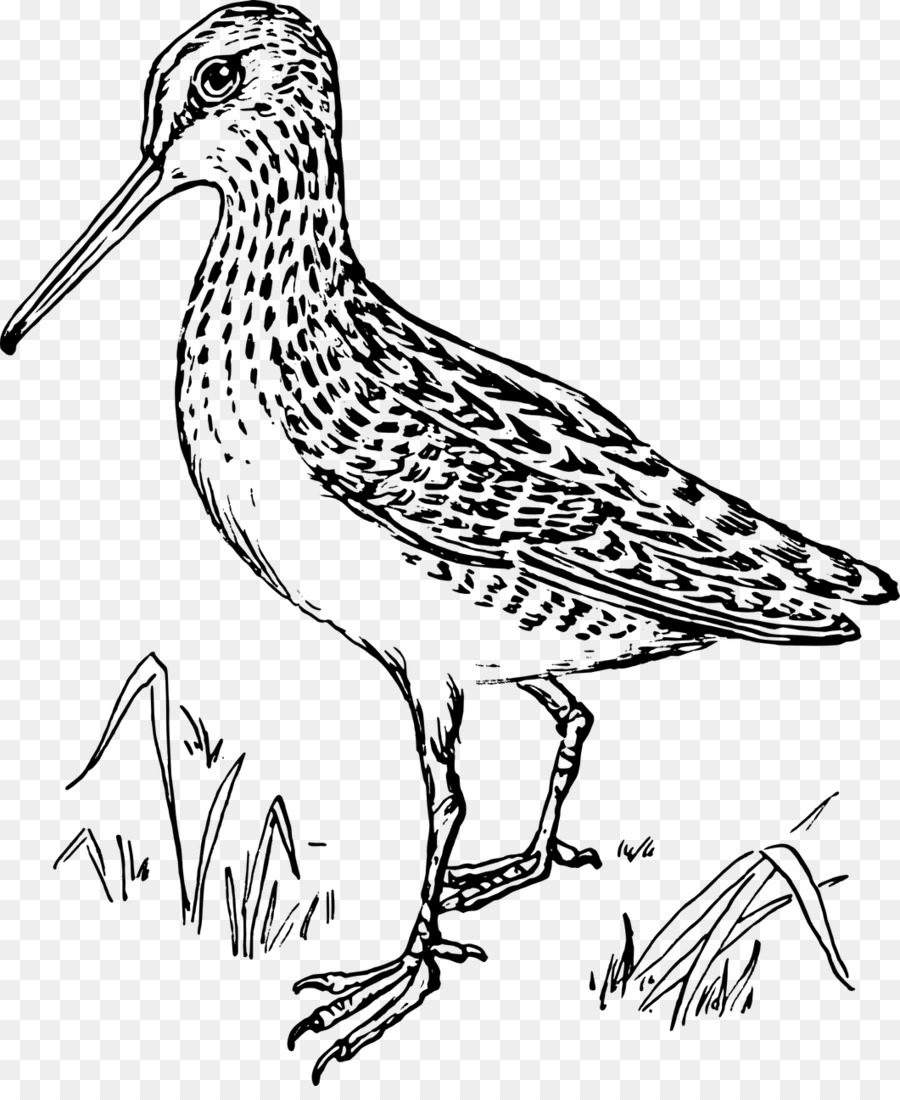 Black and white sandpiper clipart banner download Book Black And Whitetransparent png image & clipart free download banner download