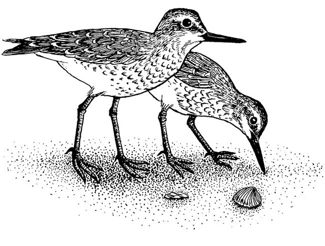Black and white sandpiper clipart picture freeuse download clipart shore bird lrg | Free to use in your art, but not fo… | Flickr picture freeuse download