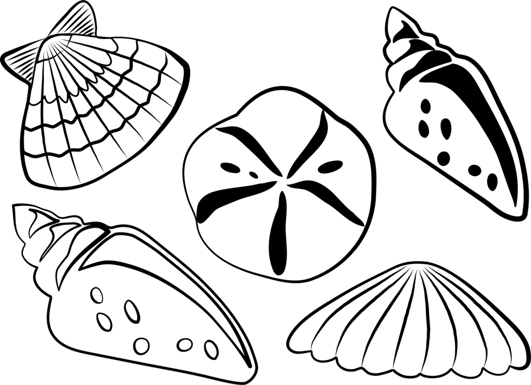 Sea shell clipart black and white banner transparent library Sea shell clipart black and white 4 » Clipart Portal banner transparent library