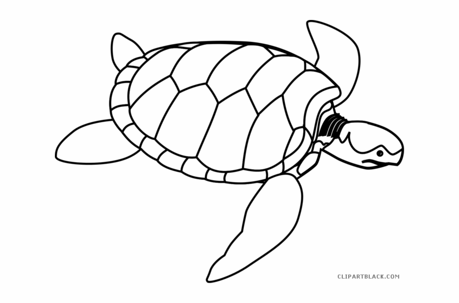 Sea turtle with a black and white clipart picture library library Black White Collection And - Sea Turtle Line Drawing Free PNG Images ... picture library library
