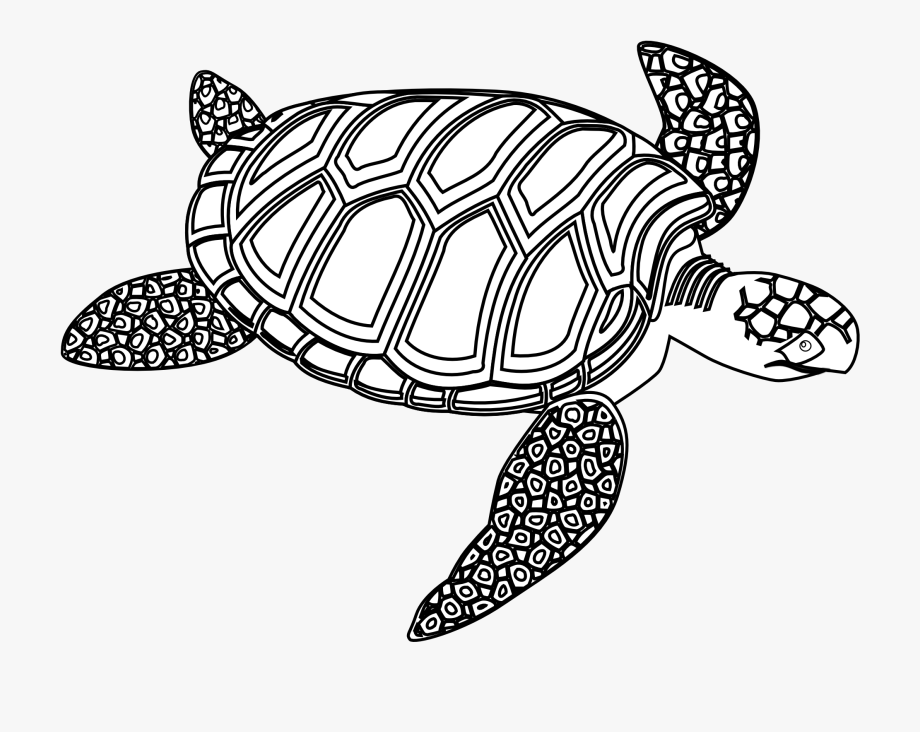 Sea turtle with a black and white clipart svg black and white download Sea Turtle Clipart Ocean Turtle - Black And White Turtle #70903 ... svg black and white download