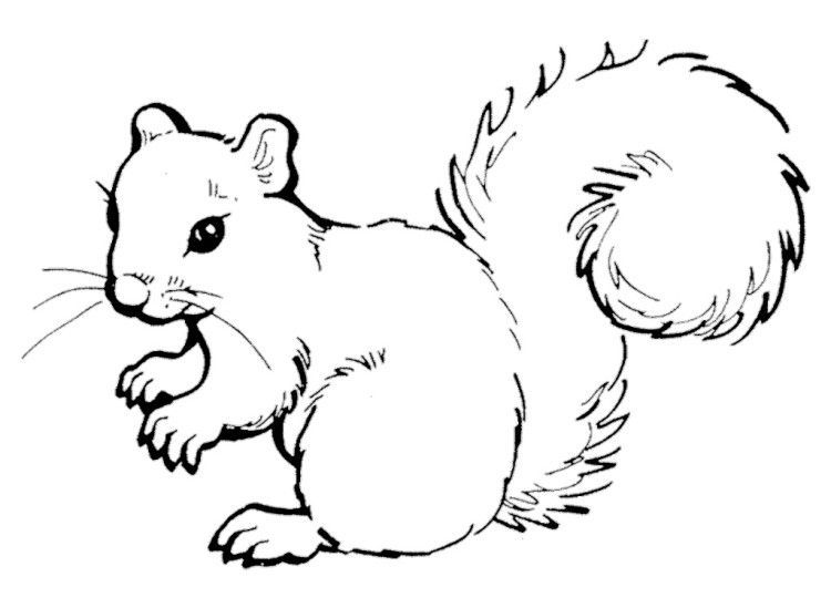 Squirrel clipart black and white picture free stock Cute squirrel clipart black and white 4 » Clipart Portal picture free stock