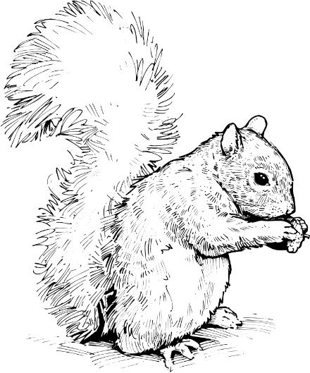Black and white squirrel clipart image transparent library Squirrel clipart black and white » Clipart Station image transparent library