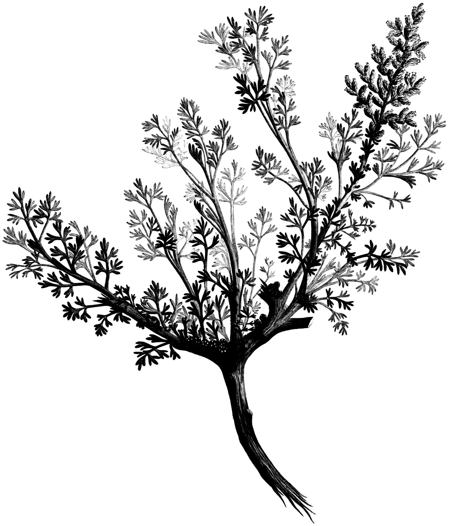 Black and white subtle tree patterns clipart clip art transparent download Pin by Trina Colson on Print   Black, white tree, Clipart black ... clip art transparent download