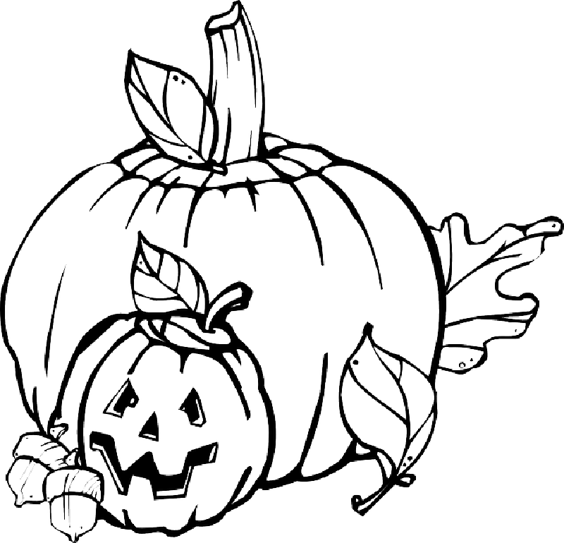 Free clipart of pumpkin life cycle banner royalty free stock Pumpkin Plant Drawing at GetDrawings.com | Free for personal use ... banner royalty free stock