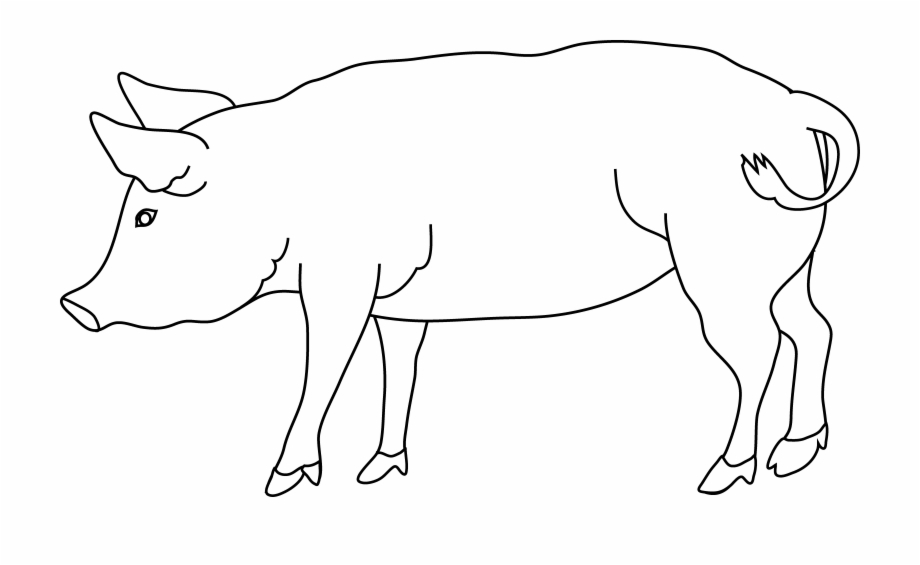 Black and white transparent chicken and pig clipart clipart download Pig Outline Png Transparent Background - Pigs Drawing Black And ... clipart download