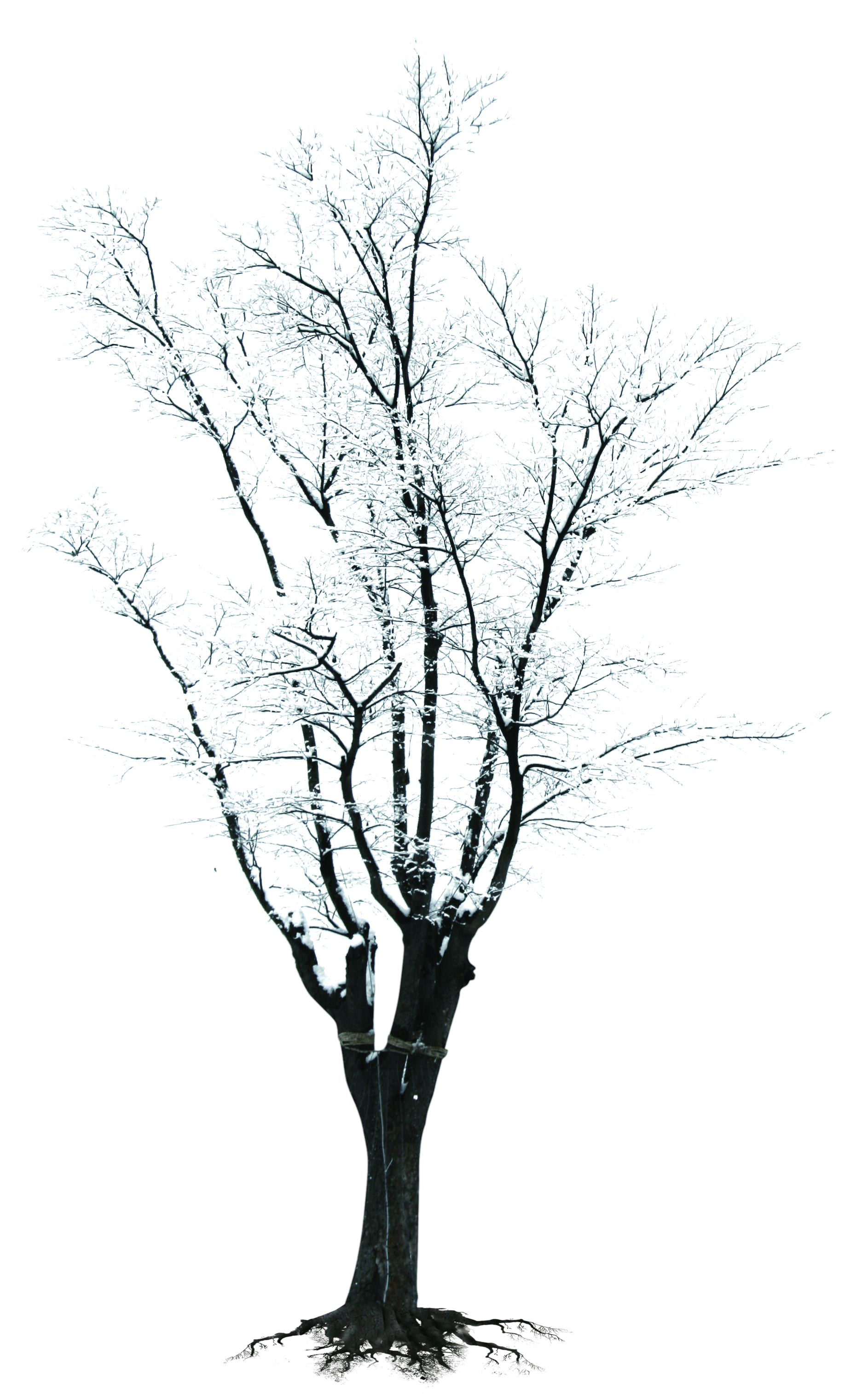 Black and white tree branch clipart banner Tree Branch Winter Clip art - Winter snow branches creative 1886 ... banner