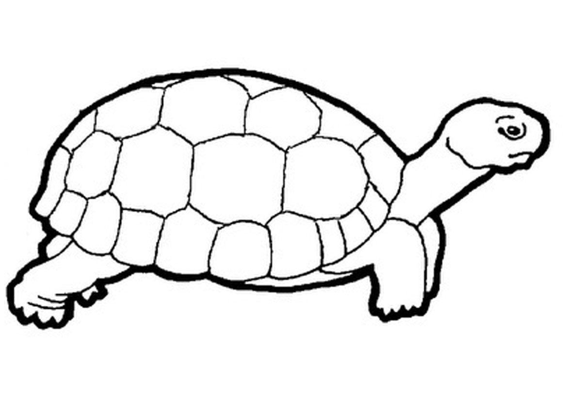 Clipart turtle cloring