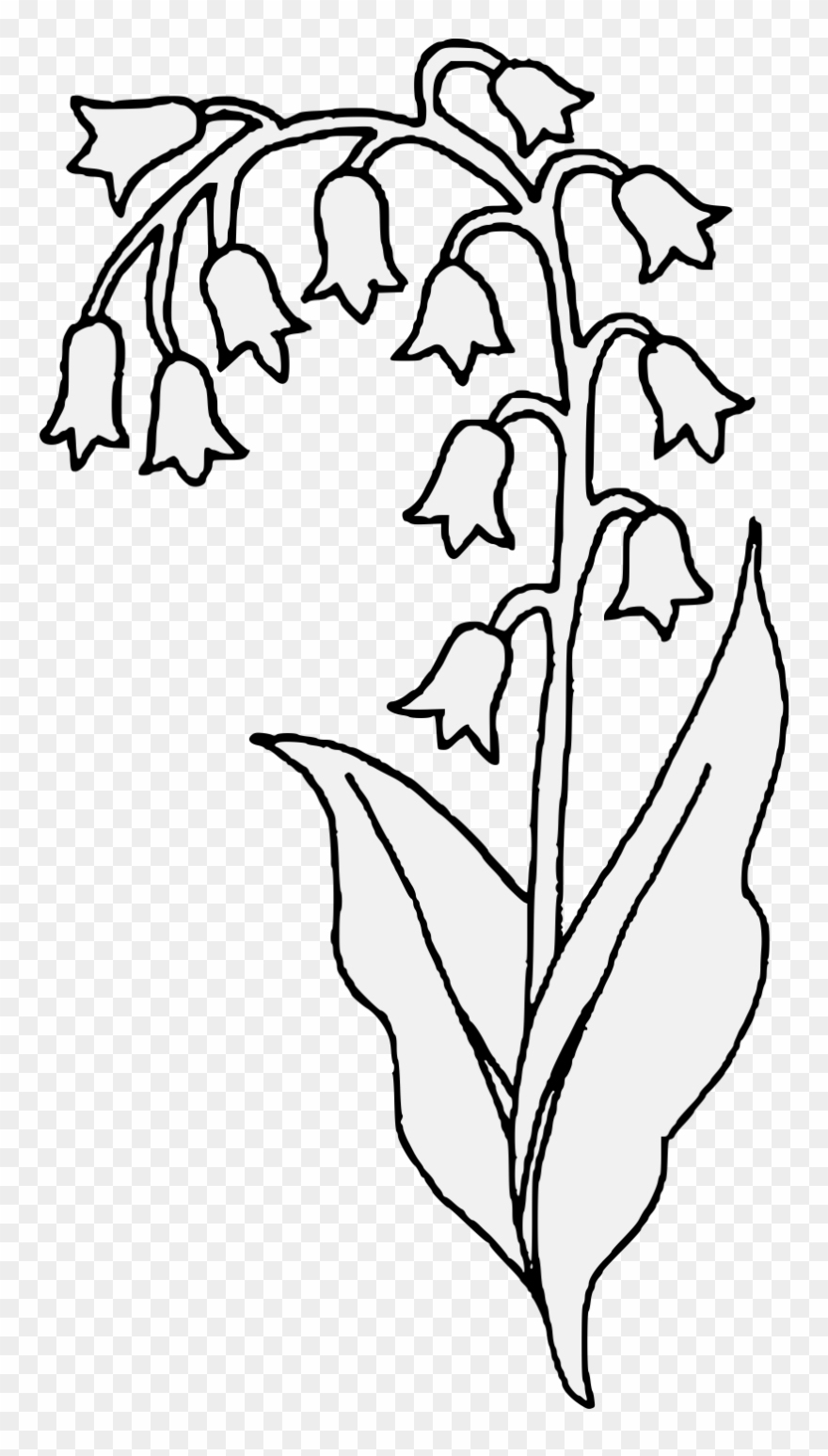 Black and white valley clipart clip art royalty free library Lily Of The Valley Clipart Transparent - Lilies Of The Valley Sketch ... clip art royalty free library