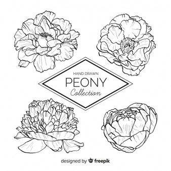 Black and white wedding flower clipart k and r jpg stock Peony Vectors, Photos and PSD files | Free Download jpg stock