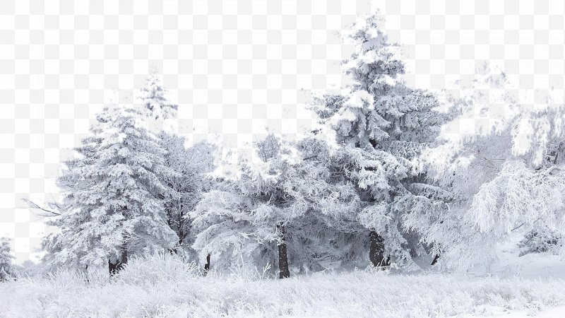 Black and white winter birch tree clipart png library download Snow Tree Winter Birch Wallpaper, PNG, 1920x1080px, Snow, Birch ... png library download