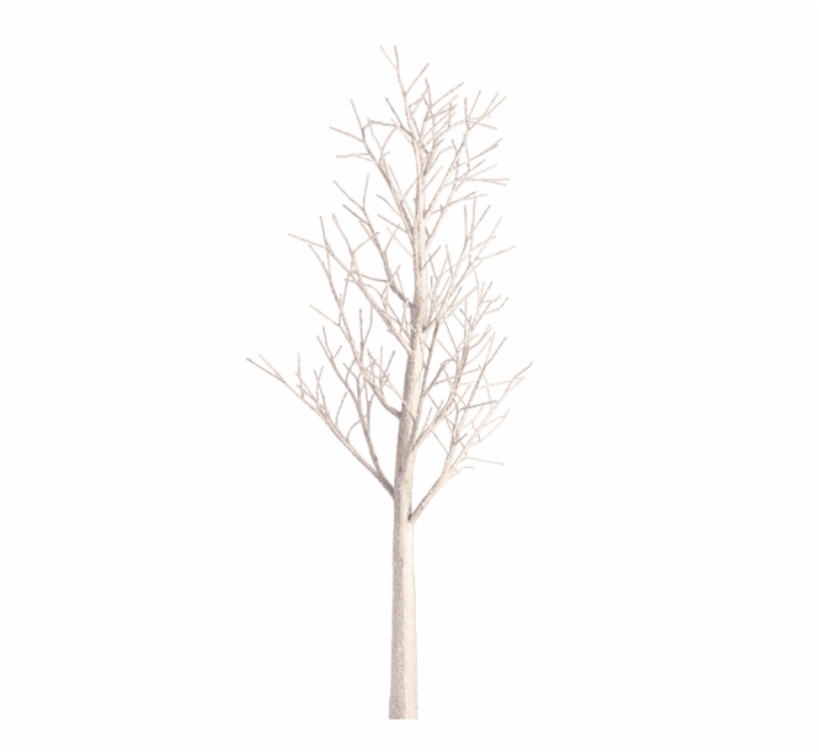 Black and white winter birch tree clipart picture library library White Birch Tree Transparent White Birch Images Pluspng - Canoe ... picture library library