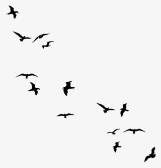 Black bird clipart images graphic Black Bird PNG Images   PNG Cliparts Free Download on SeekPNG graphic