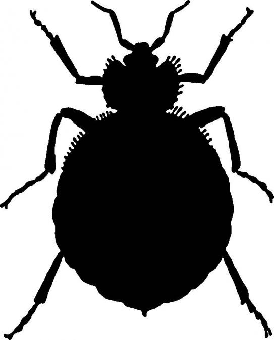 Black bug clipart picture freeuse stock Free Bug Cliparts Black, Download Free Clip Art, Free Clip Art on ... picture freeuse stock