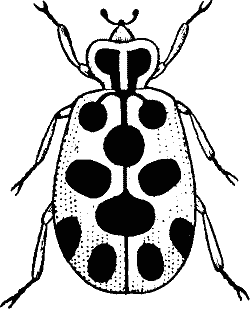 Black bug clipart graphic freeuse library Bugs Black And White Clipart - ClipArt Best   bugs and weeds   Black ... graphic freeuse library