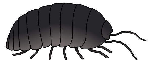 Woodlouse clipart vector royalty free download Free Bug Cliparts Black, Download Free Clip Art, Free Clip Art on ... vector royalty free download