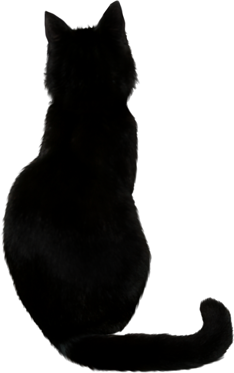 Image - Black Cat.png | Glee TV Show Wiki | FANDOM powered by Wikia image library stock