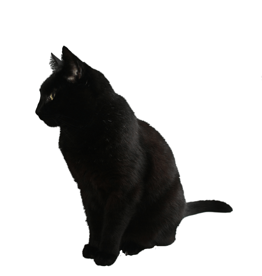 Black cat clipart free vector library Black Cat Clipart Transparent #2493174 vector library