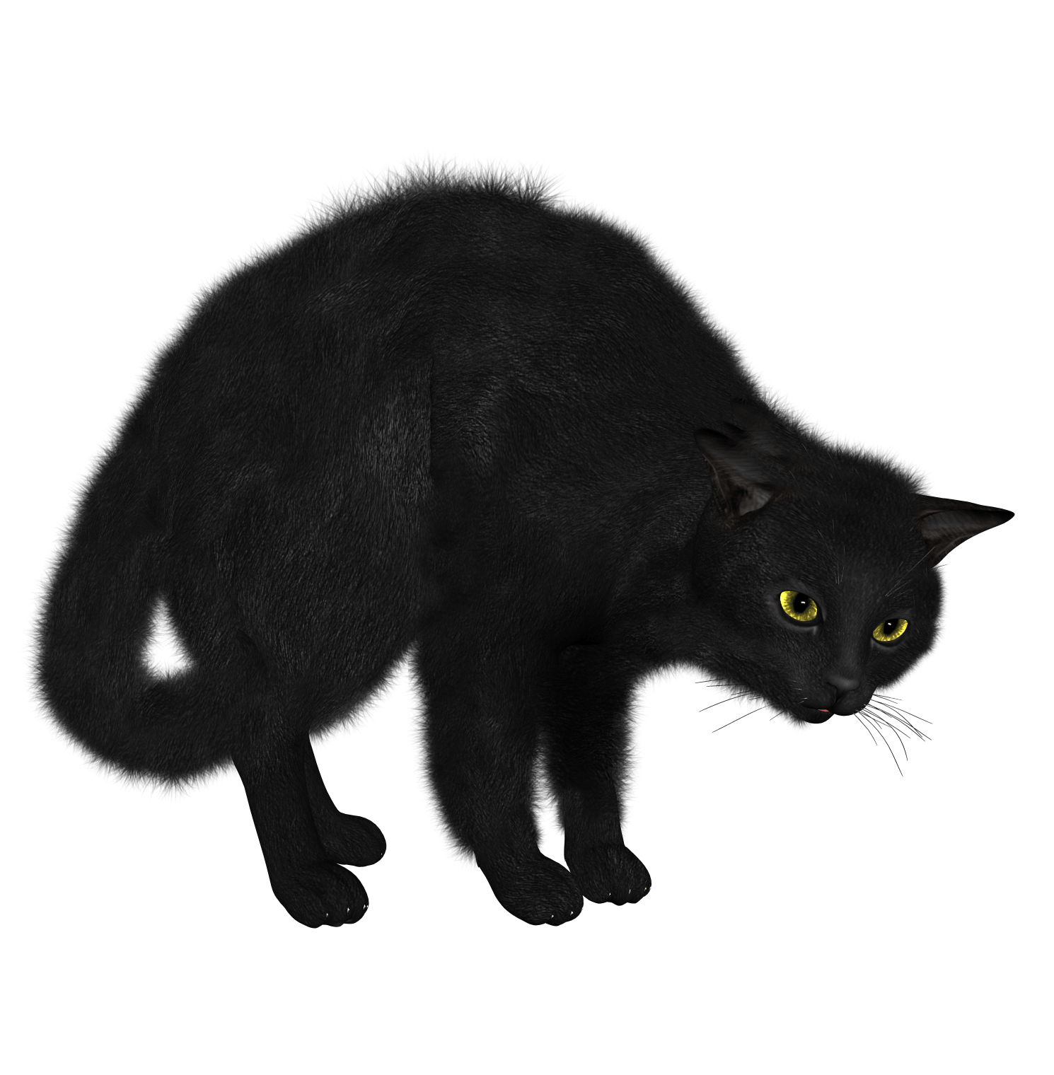 Black Cat Looking transparent PNG - StickPNG graphic royalty free library