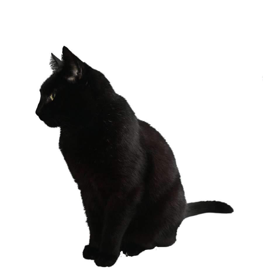 Black cat sitting clipart banner Black Cat Sitting PNG - PHOTOS PNG banner