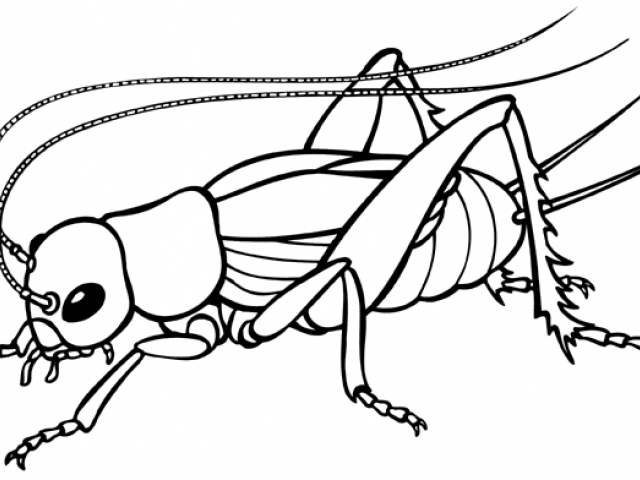 Black cricket insect clipart jpg library Cricket Insect Drawing | Free download best Cricket Insect Drawing ... jpg library