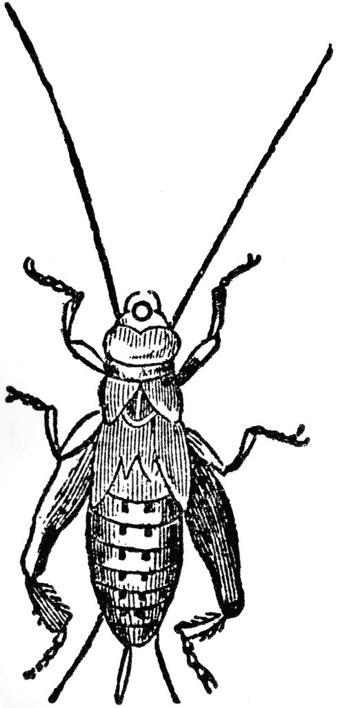 Vintage kids bug clipart