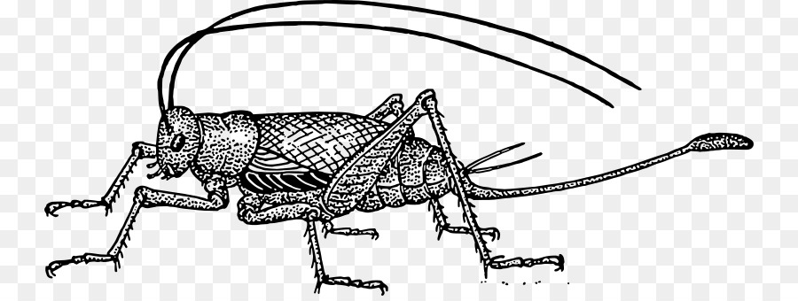 Black cricket insect clipart clipart freeuse download Cricket Bat png download - 800*334 - Free Transparent Cricket png ... clipart freeuse download