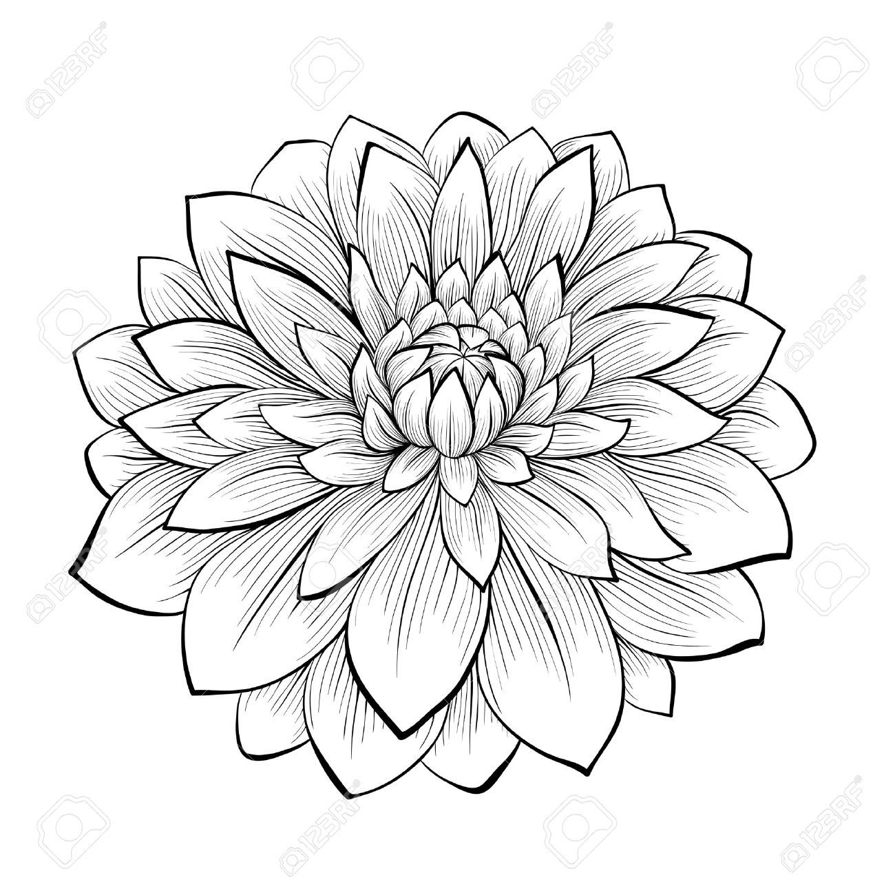 Black dahlia clipart png royalty free library Dahlia clipart black and white 7 » Clipart Portal png royalty free library