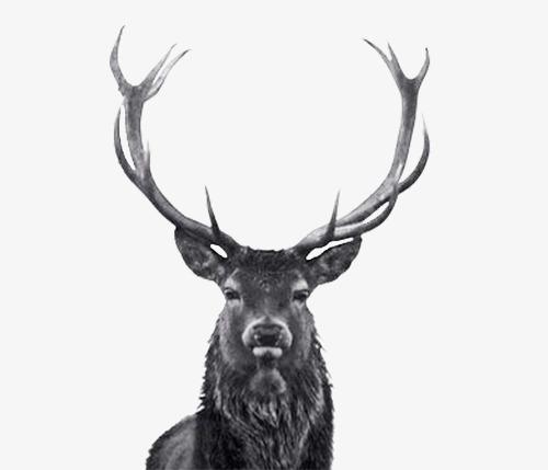 Black elk clipart clip stock Elk, Hand Painted Elk, Animal, Black Elk #55664 - PNG Images - PNGio clip stock