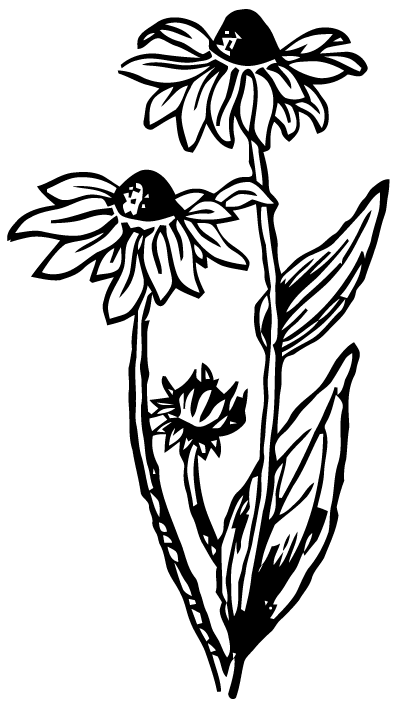 Black eyed susan clipart black and white clipart stock Free Vector Art: Black-Eyed Susan | Images from Ephemeraphilia.com ... clipart stock
