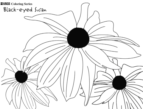 Black eyed susan clipart black and white royalty free download Black-eyed Susan coloring page | Free Printable Coloring Pages royalty free download