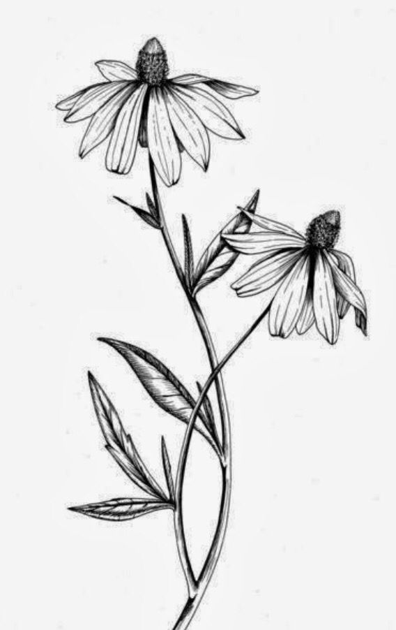 Black eyed susan clipart black and white picture freeuse download If these were daisies, this would be perfect for me. ;) | tattoos ... picture freeuse download