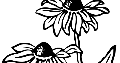Black eyed susan clipart black and white clip free download Black Eyed Susan Clipart (106+ images in Collection) Page 2 clip free download