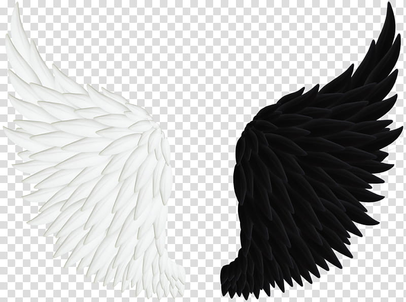 Black feather angel wing clipart banner download Angel Wings , pair of white and black wings illustration transparent ... banner download