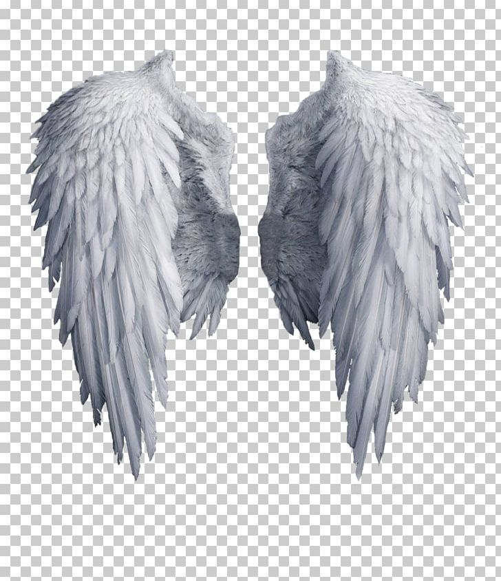 Black feather angel wing clipart png freeuse download Angel Wing PNG, Clipart, Angel Wing, Angel Wings, Art White, Black ... png freeuse download