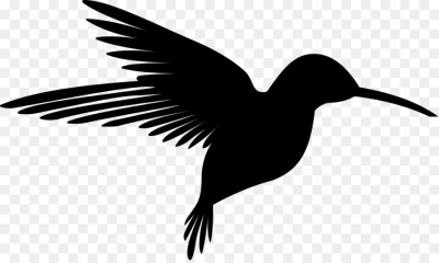 Black hummingbird etch clipart picture library library Hummingbird PNG - DLPNG.com picture library library