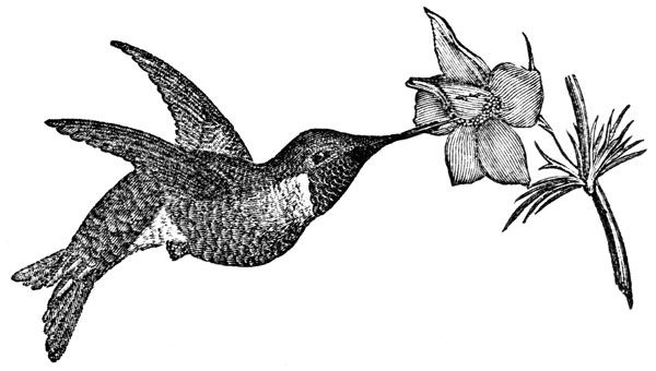 Black hummingbird etch clipart png freeuse library Hummingbird Clipart Black And White (92+ images in Collection) Page 1 png freeuse library