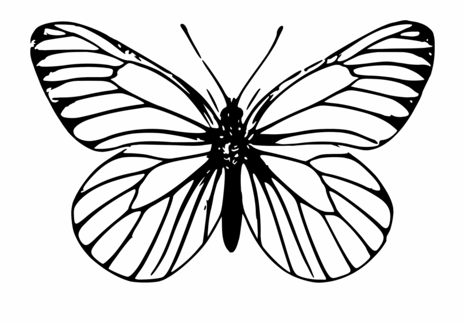 Black outline clipart of butterfly picture transparent stock Monarch Butterfly Outline Drawing Template - Butterfly Png Clipart ... picture transparent stock