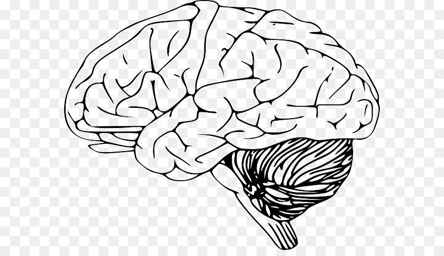 Black outline of figure with brain clipart image free stock Human Brain Png Black And White & Free Human Brain Black And White ... image free stock