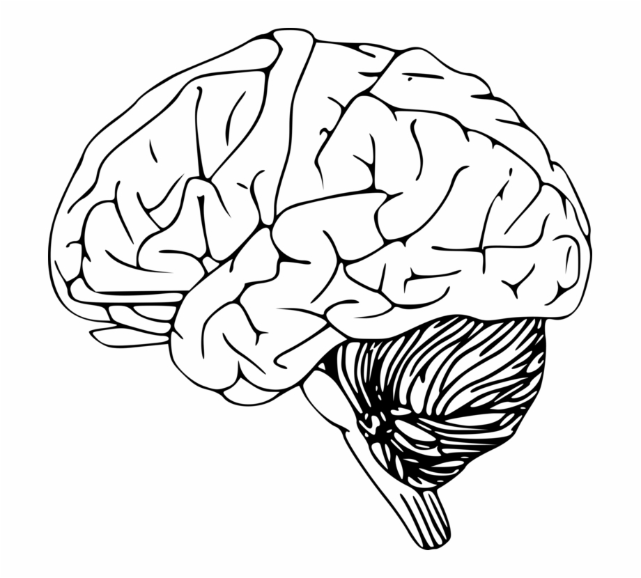 Black outline of figure with brain clipart clip art black and white stock Outline Of The Human Brain Drawing Human Head - Transparent Brain ... clip art black and white stock