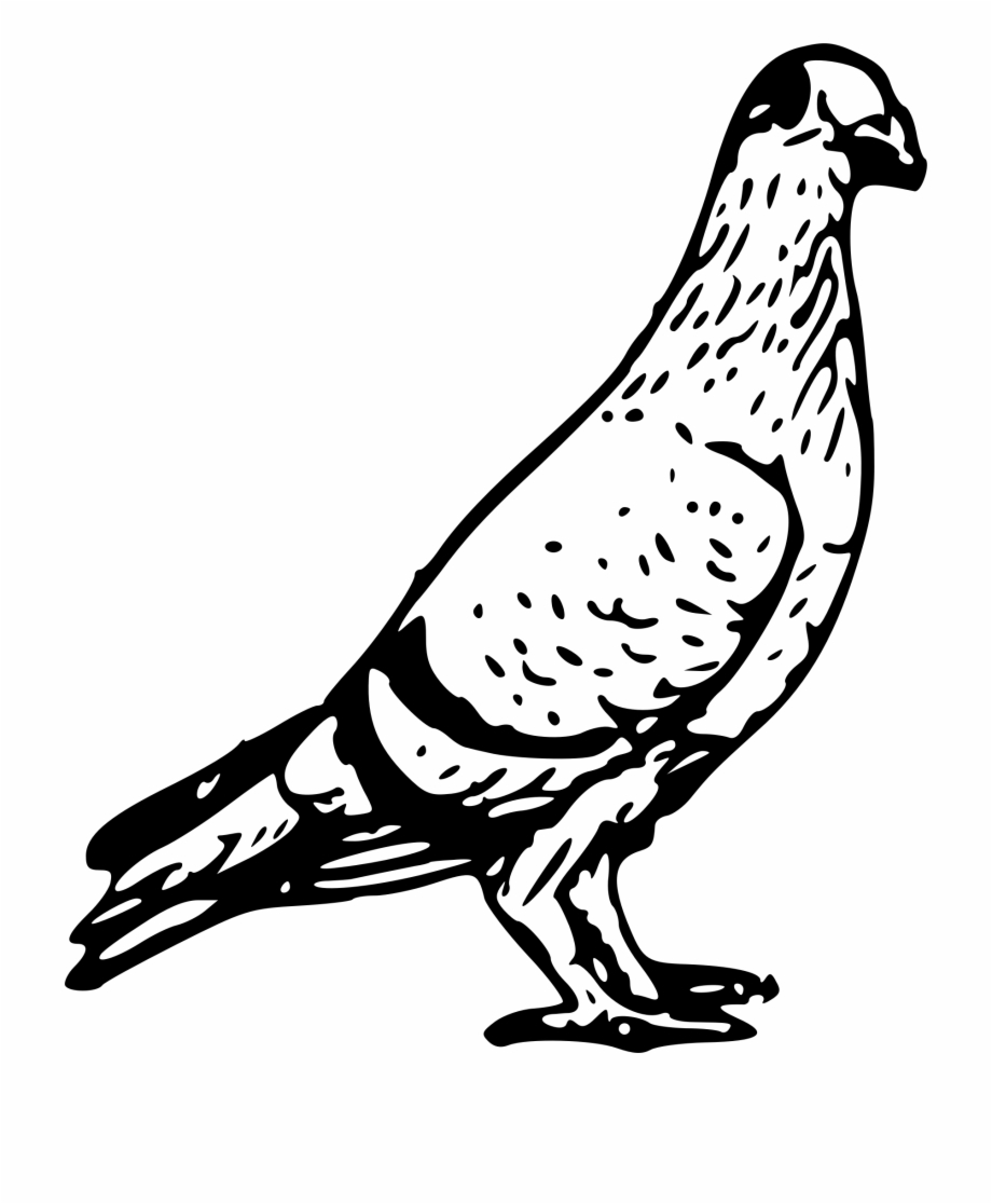Black pigeon clipart images svg download Independence Drawing Bird - Pigeon Black And White Clipart ... svg download